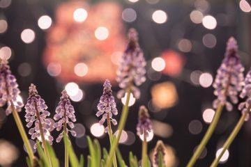 arreglos florales para decorar el hogar