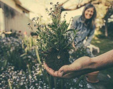 qué hacer antes de cultivar un jardín